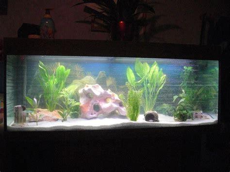 aquarium design eau chaude lancement d aquarium d eau chaude page 6