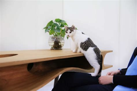 cat table cat table for architect cat lovers miragestudio7 2018