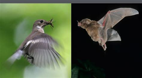 canmove centre for animal movement research bat and