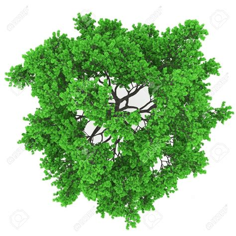 tree plan view png trees plan view trees pinterest