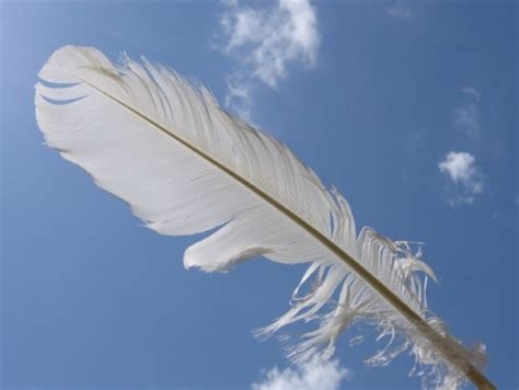 fallen feather film journey of hope