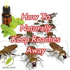 how to keep bed bugs away 1000 ideas about roaches on pinterest roach killer bed