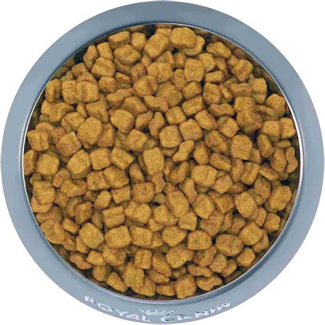 chewy puppy food royal canin boxer puppy food 30 lb bag chewy