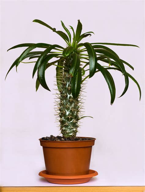 indoor plants that don t need light dress up your home with these indoor plants that don t