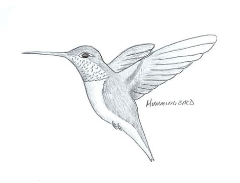 how to draw a hummingbird draw tech pinterest