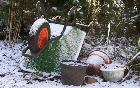 winter gardening gardening in winter a complete guide primrose