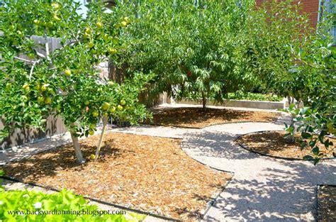 backyard fruit orchard best 25 orchard design ideas on pinterest small garden orchard espalier fruit