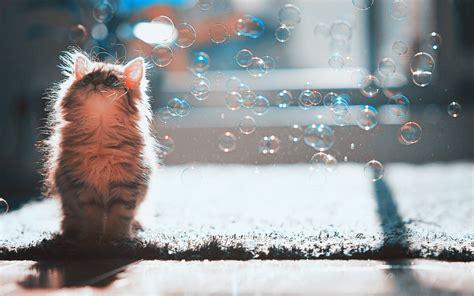bobble kitten cat bubbles wallpaper kittens wallpaper