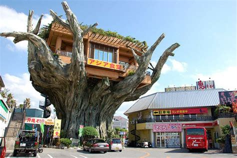 amazing houses amazing tree houses