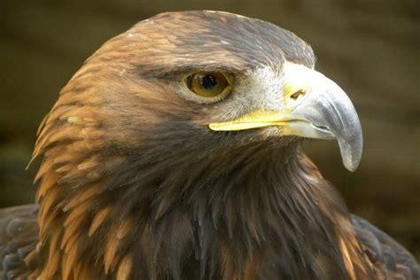 imagenes de animales de zacatecas flora y fauna de zacatecas especies m 225 s representativas