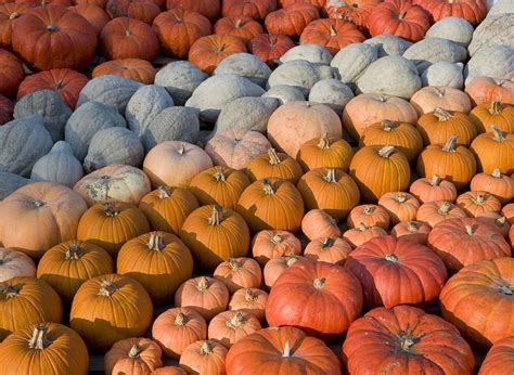 pumpkin colors 12 things you may not about vintage everyday