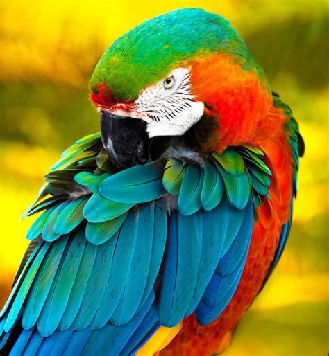 colorful birds nature beautiful wallpaper of colorful birds tafreeh