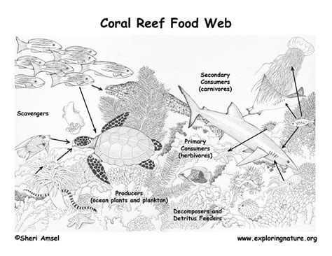 free coloring pages of coral reef food chain