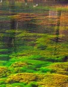 fadenalgen im schwimmteich fadenalgen im aquarium und teich bek 228 mpfen hausgarten net