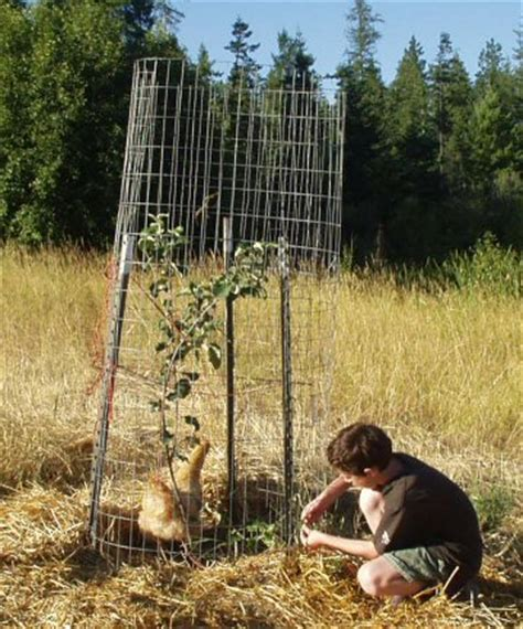 protecting fruit trees from deer ants and aphids on my apple tree