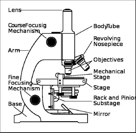 compound light microscope facts parts of a microscope worksheet download a quot parts of