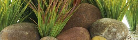 Wasserpflanzen Pflege by Pflanzen F 252 Rs Aquarium Infos Hornbach