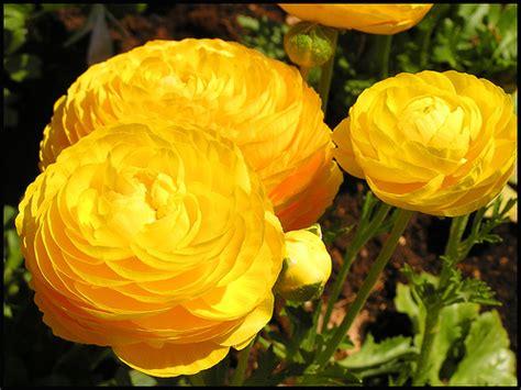 Perennial Flowering Plants Landscaping Gardening Ideas Flowers For Gardens Perennials