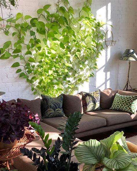 neon pothos  images house plants indoor plant