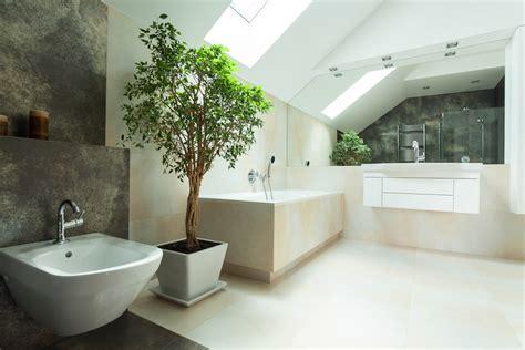 decorare baie plante pentru baie rezistente la umezeala elvila blog
