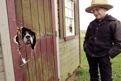 amish puppies 14 best images about puppy mills stop them on amish religion auction and