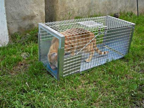gabbia trappola uccelli colonie feline