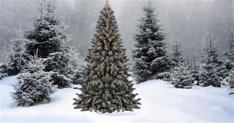 snow falling on the christmas tree wallpapers hd download