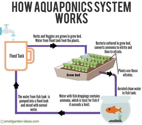 aquaponics diagram aquaponics systems for indoor gardening small garden ideas