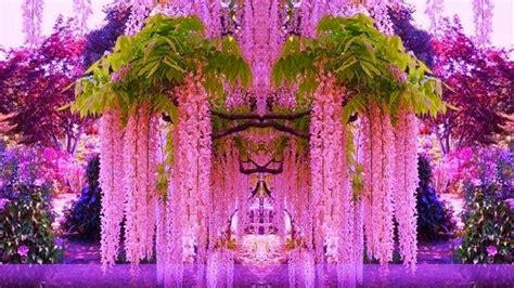 kawachi fuji gardens kawachi fuji gardens japan archetypes