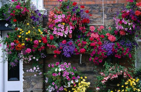 Hanging Garden Ideas Flowering Hanging Basket Ideas