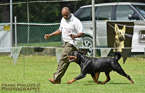 juffther rottweilers barbados kennel club s all breeds chionship show october 2013 dogs in barbados