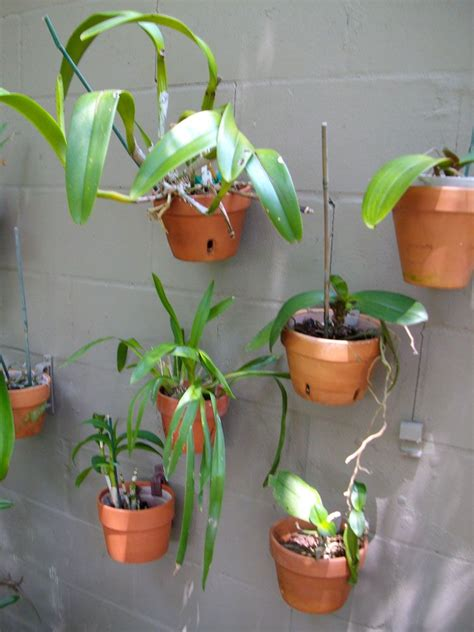 Outside Plant Hangers - make a dull wall come alive and create more space by