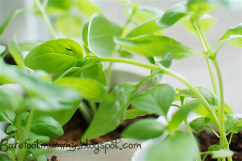 life in the slow lane fun with fungus gnats