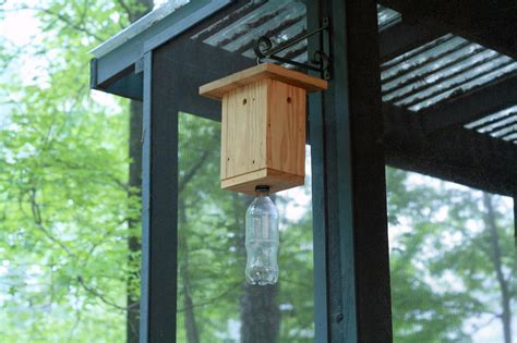 carpenter bee house how to make a carpenter bee trap hgtv