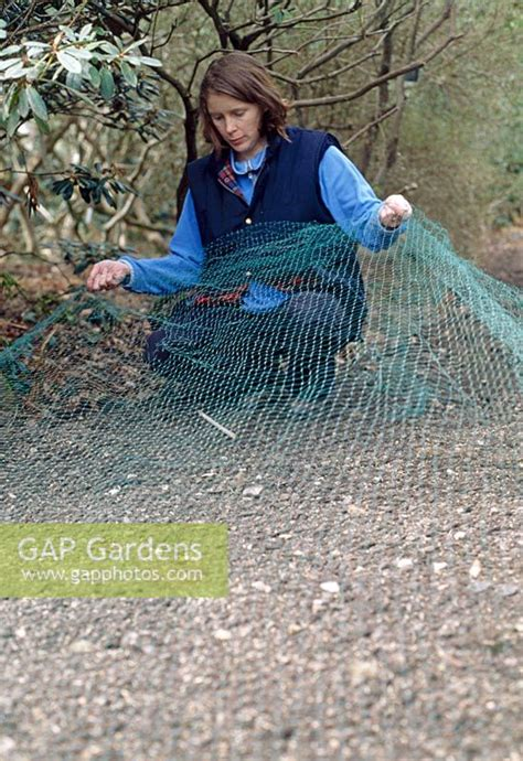 gap gardens protecting grass seed small areas