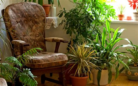 tips  moving  houseplants indoors  winter