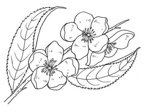 imagenes de flores reales para imprimir dibujos para colorear fotos dibujos primavera foto 3 28