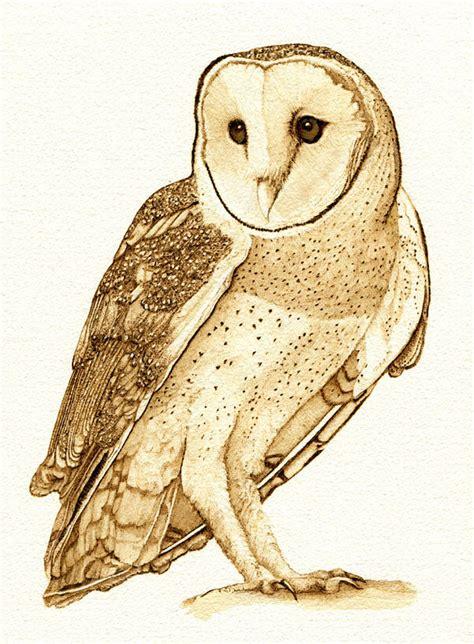 Barn Owl 5 Drawing By Cate Mccauley Barn Owl Drawing