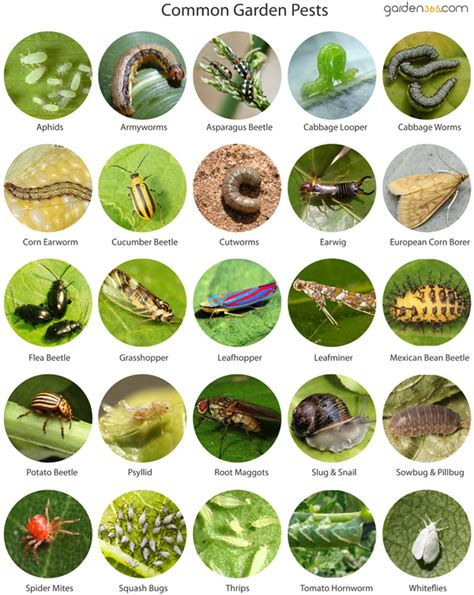 garden pests crossword clue archive by garden pests home design inspirations