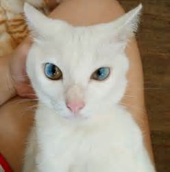 what color are cats cat has eye condition but just take a closer look