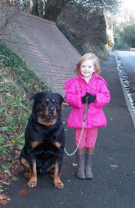 rottweilers and children 1000 images about