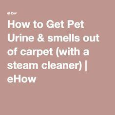 How To Get Cat Urine Out Of Rug 1000 images about cleaning ideas on