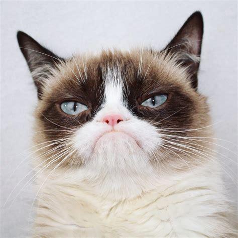 Cat Cat grumpy cat on
