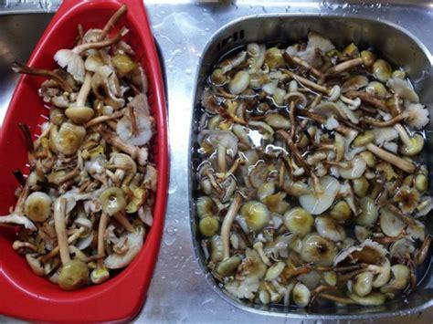 come cucinare i chiodini freschi funghi chiodini sott olio