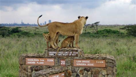 best safari in kenya best safaris