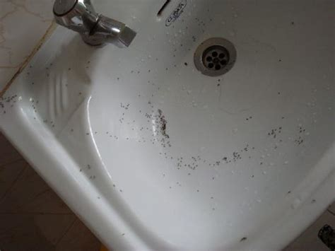 small ants in bathroom gen4congress