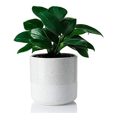 greenaholics indoor plant pot    glazed