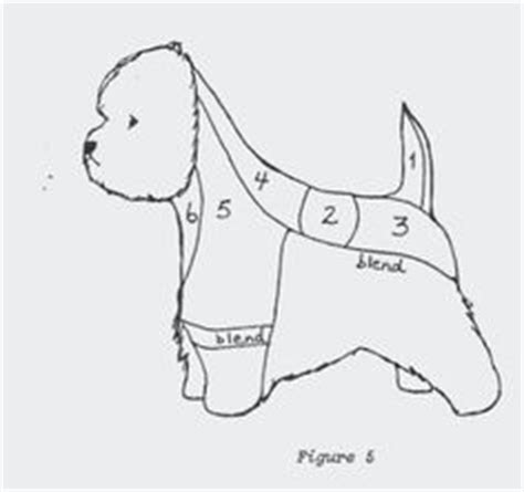 diagram for cutting a westie 1000 images about east coast westie on pinterest white