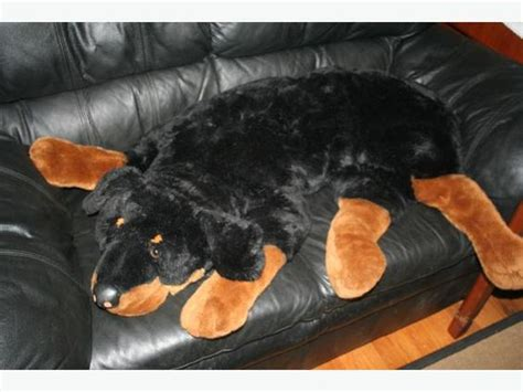 rottweiler stuffed animals the world s catalog of ideas