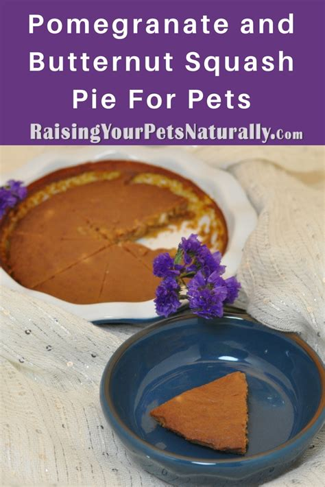 butternut squash for dogs pomegranate and butternut squash pie for dogs cats and pets raising your pets